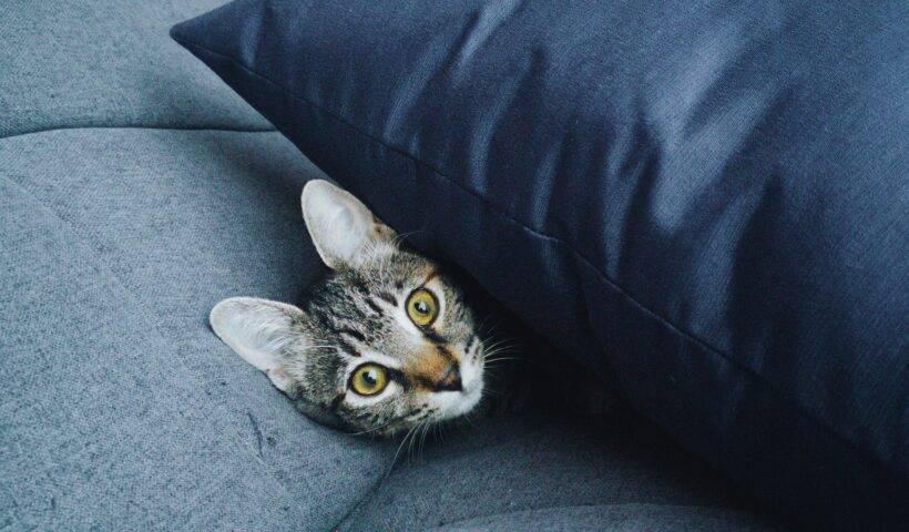 mejores planes gatos madrid