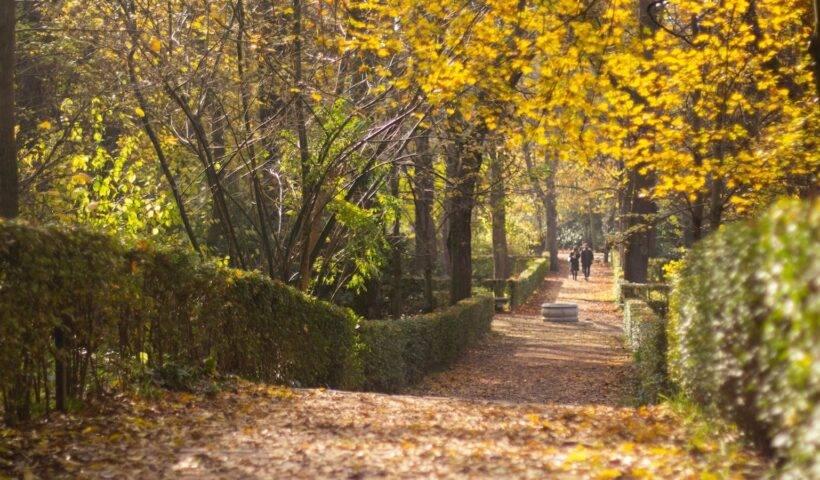 Rutas de senderismo otoñales en Madrid